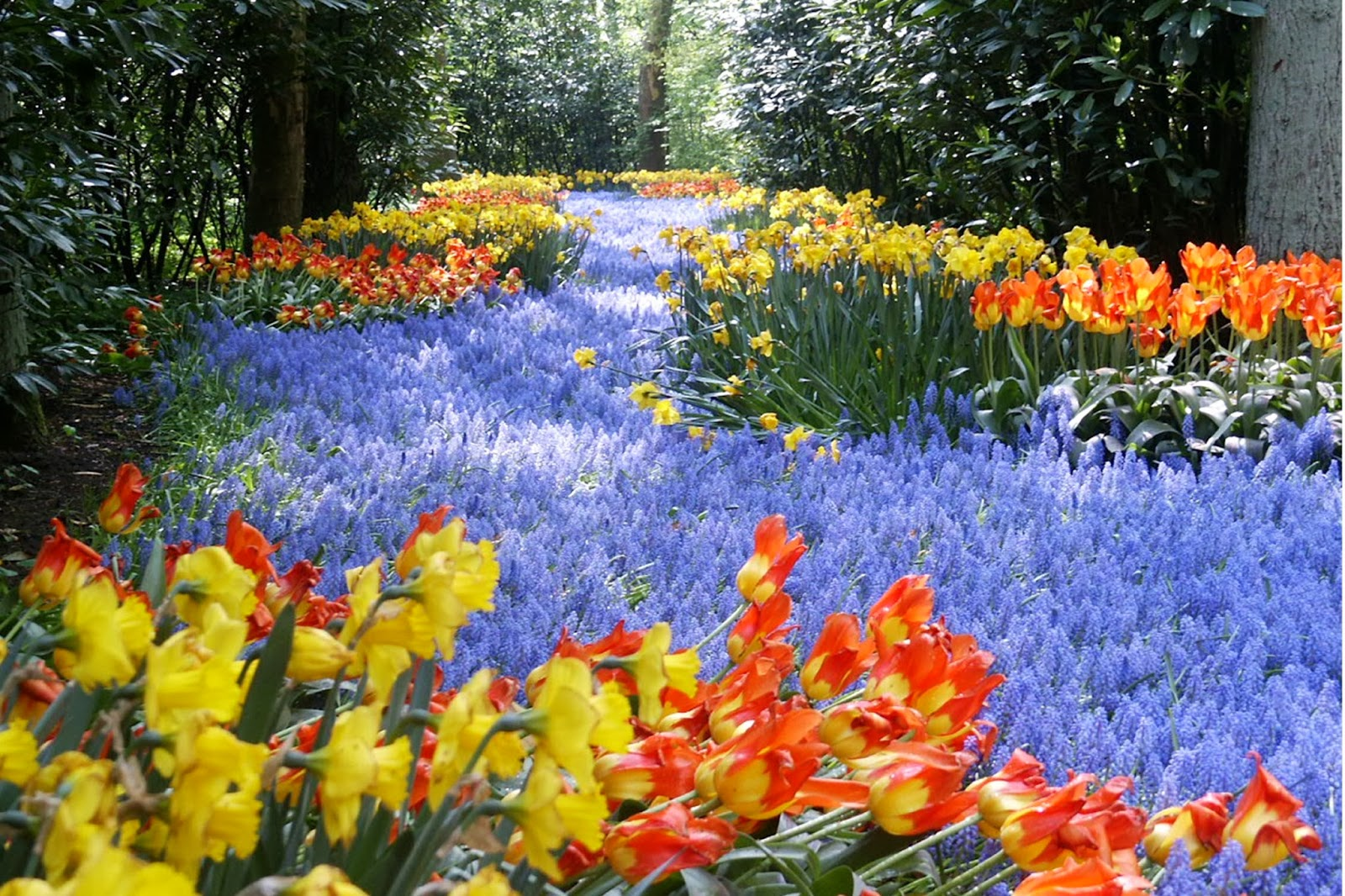 desktop hd wallpapers free downloads: keukenhof gardens – the