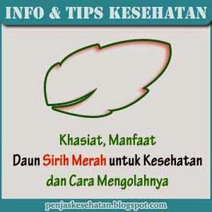 khasiat manfaat daun sirih merah untuk kesehatan
