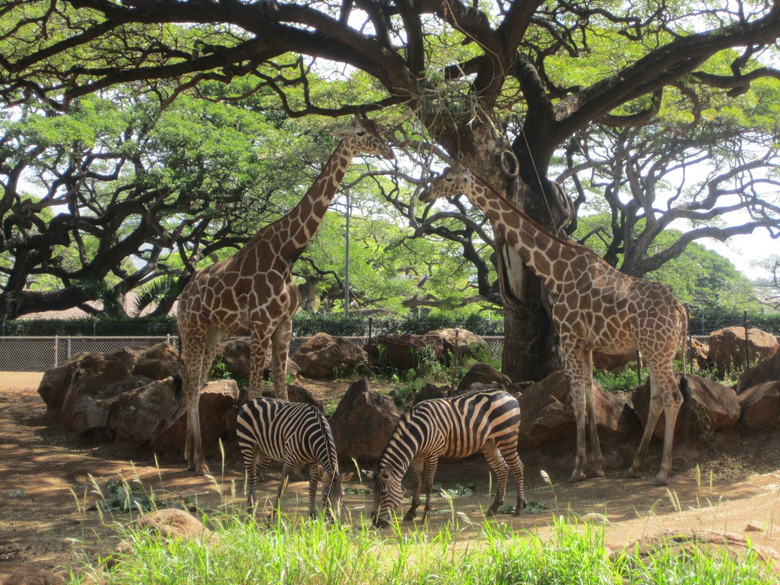 赤土でアフリカの広いサバンナ ... : 羊 子供 : 子供