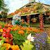 Rumah bunga, kesetiaan selama 60 tahun !