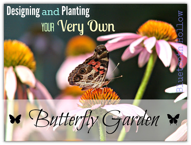 Attract Butterflies to Your Yard!