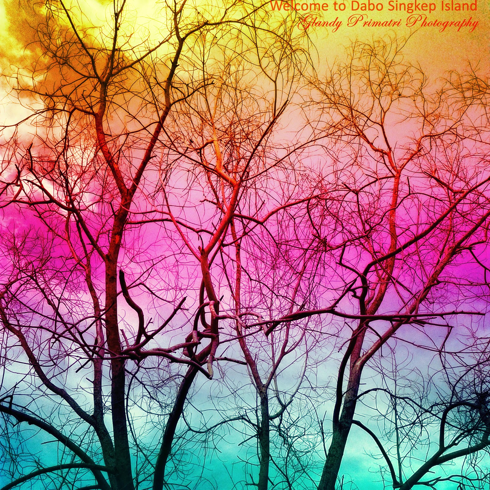 akasia, glandy, primatri, pohon, foto, alam, langit