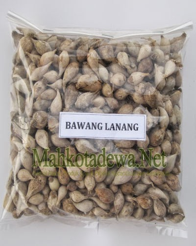 Khasiat Bawang Lanang