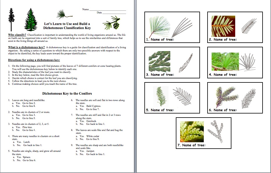 Amy Brown Science Teaching Classification and Taxonomy FUN – Taxonomy Classification Worksheet