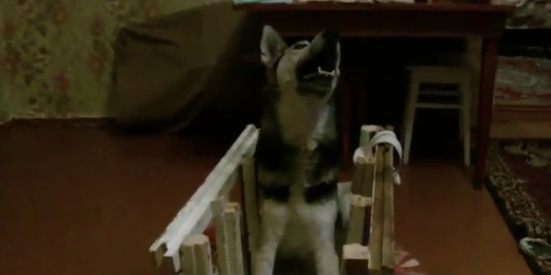 Собака покалеченная живодером