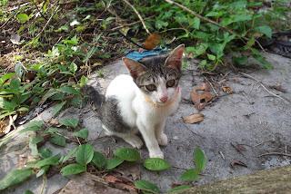 anak kucing Song Ji Hyo