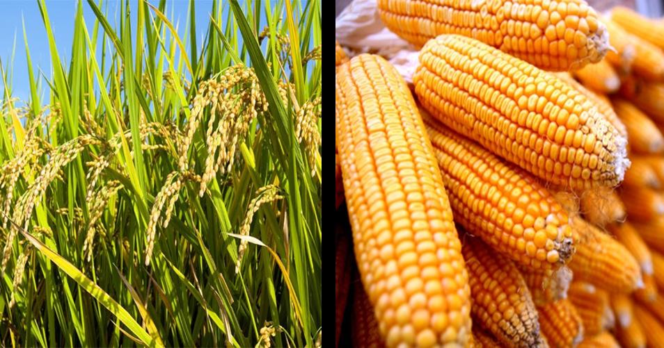 Mengerjakan Pr Soal Pilihan Fungsi Dan Peran Sumber Daya Alam Nabati Bagi Kehidupan Smp Kelas
