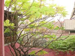 Kebun belakang