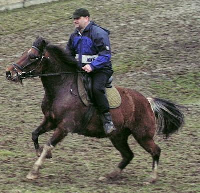 koń, konie, jazda konna