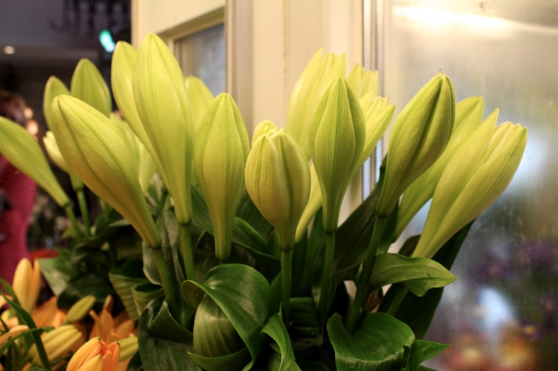 valkoiset liljat