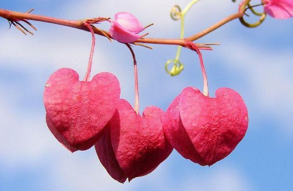 Puisi Cinta Bahasa Inggris terbaru dan artinya