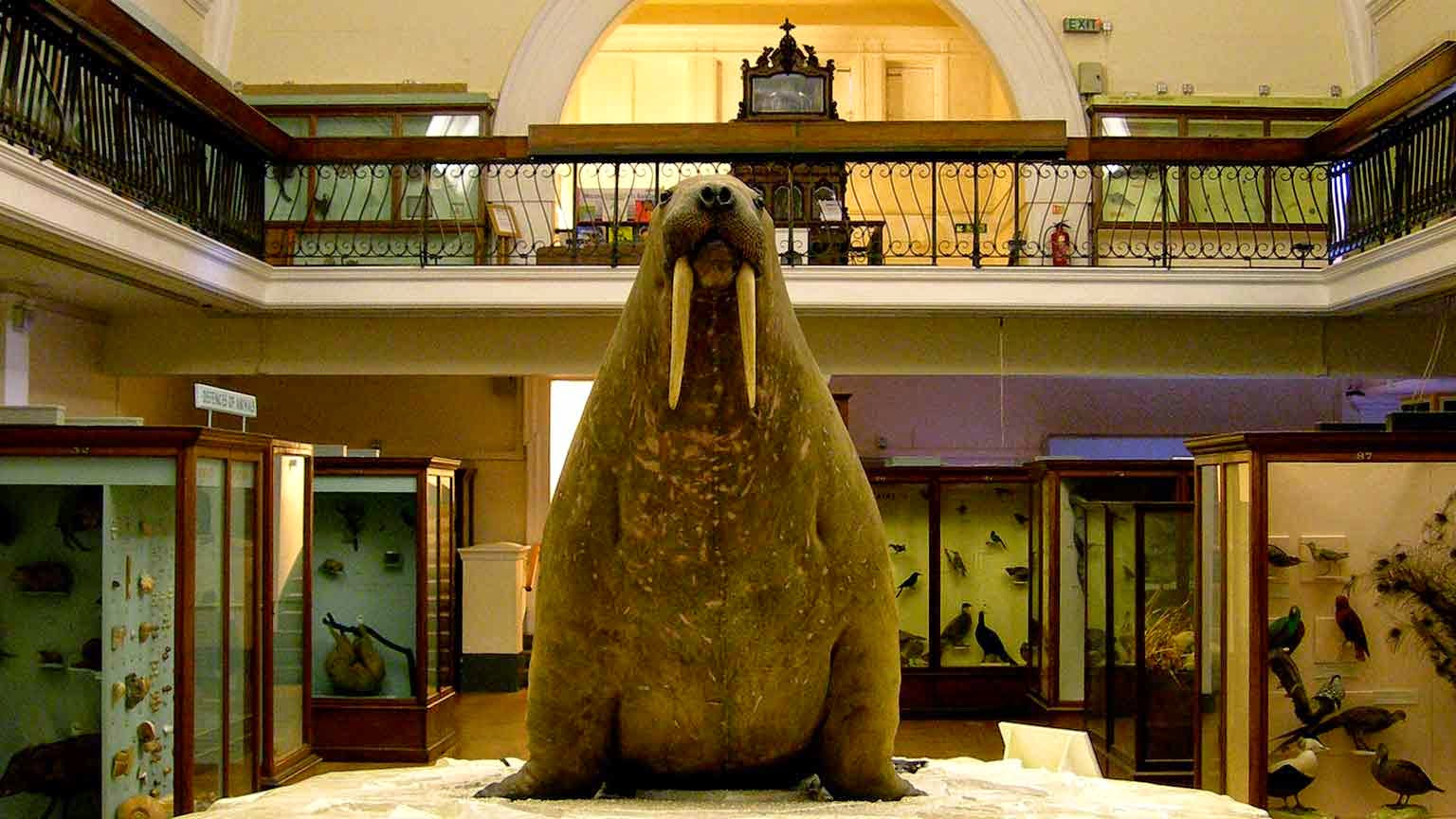 Forest Hill Society: The History and Collections of the Horniman Museum