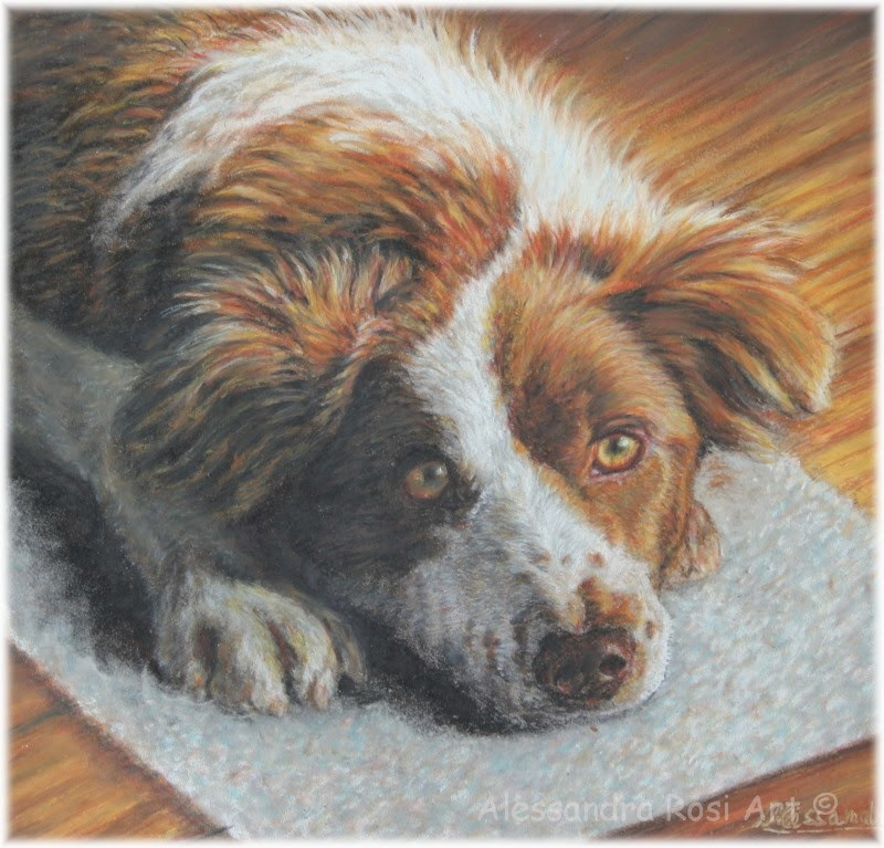 custom dog portrait in pastel