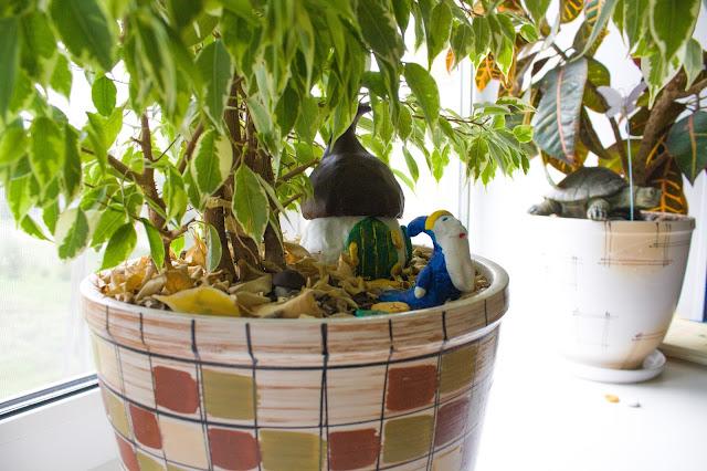 Дом для гнома в домашнем цветке