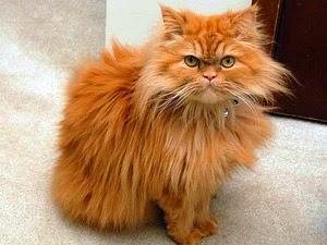 Кот по имени Чудик