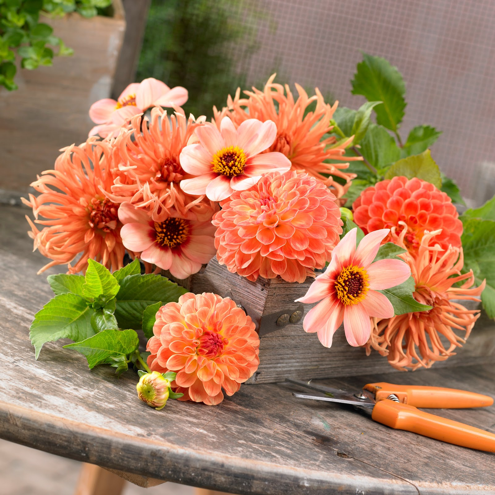The garden plot gmg 39 s friday find grow a cutting garden to create gorgeous bouquets for Best flowers for cutting garden