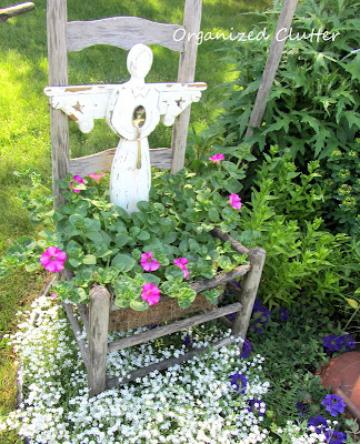 Cottage Garden - Creeping Baby's Breath
