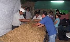 PRODUCCIÓN DE HONGOS COMESTIBLES EN UCHUPAMPA