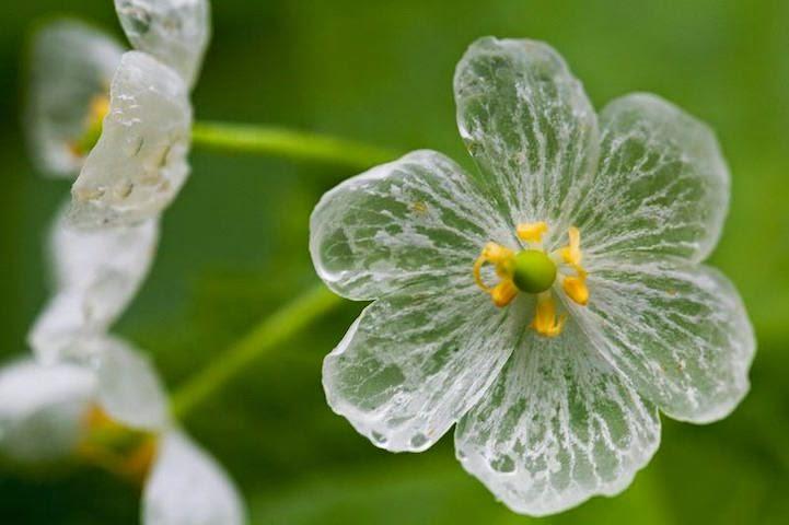 صورة لزهرة واحدة فاقدة اللون