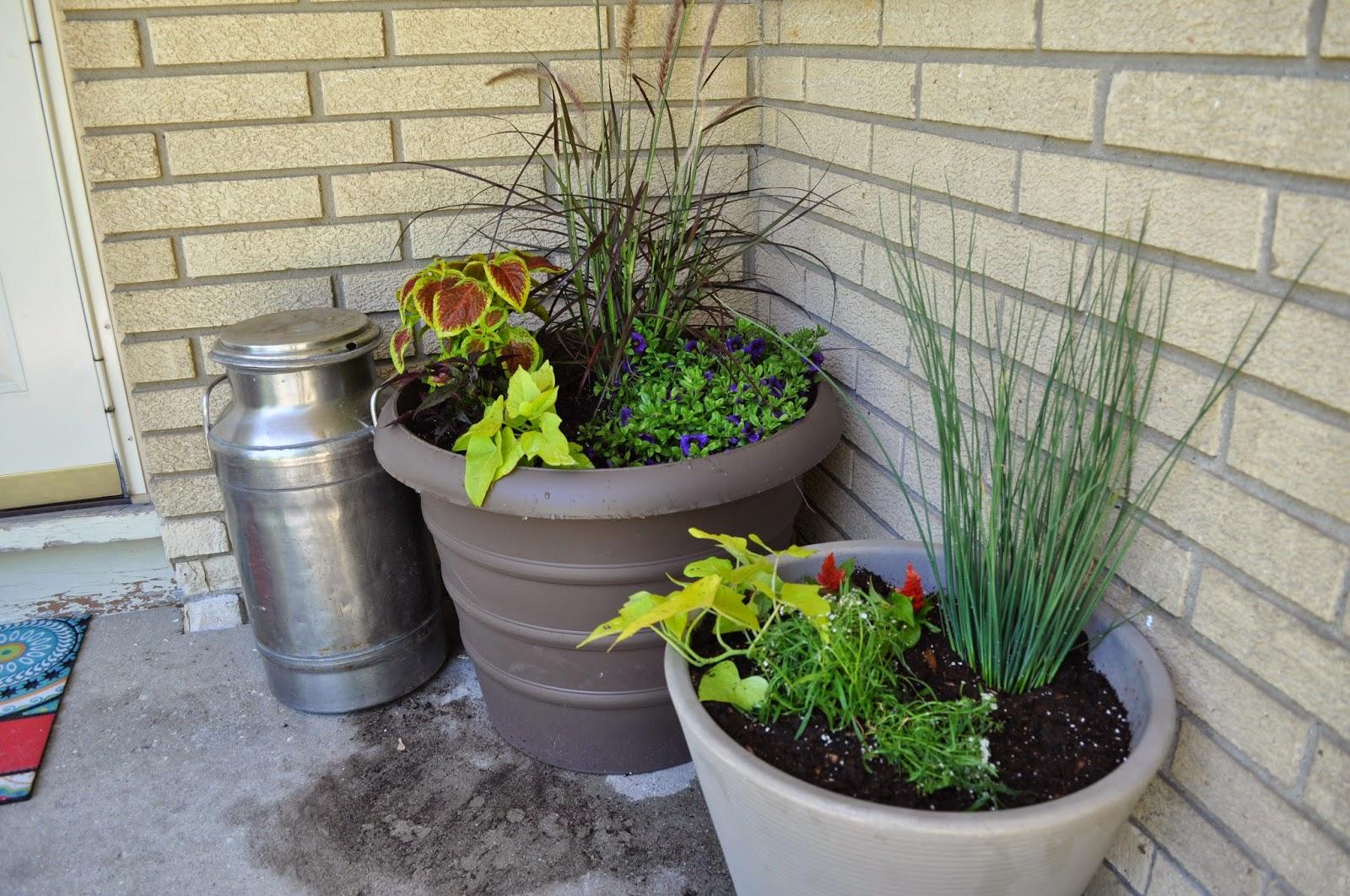 plants, sprucing up, front entry, new house, outside, painting, paint, potato vines, grasses, coleus