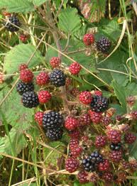 happiness in blackberry picking by seamus heaney Stephen fry is just one public figure to contribute in poems that make grown men cry by anthony and ben holden blackberry picking by seamus heaney is still a.