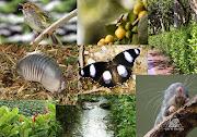 En el caso de anfibios, la región andina tiene 53% de diversidad, . (collage biodiversidad)