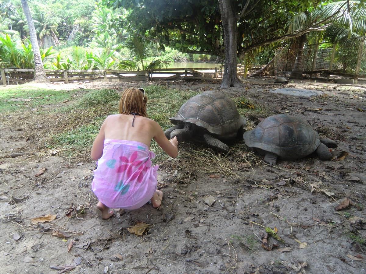 Черепахи-Альдабра