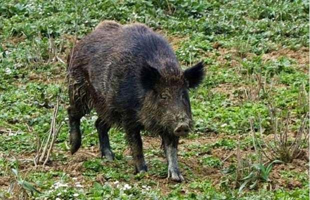 http://bioregionalismo-treia.blogspot.it/2014/09/cosa-fare-se-nel-bosco-sincontrano-orsi.html