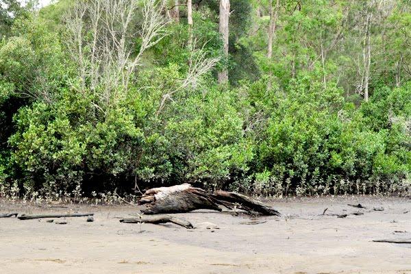 crosslands reserve mangrove swamp