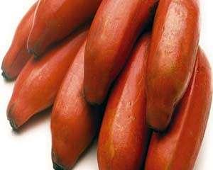 A rica banana vermelha