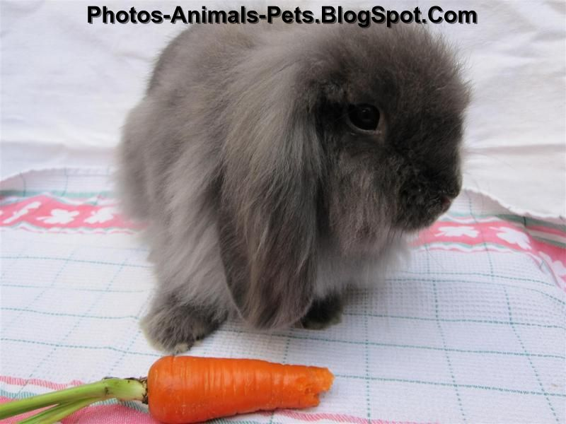 http://4.bp.blogspot.com/-3N942c8d-SU/TeIuADdjRpI/AAAAAAAABM8/GMT2OUWbPrc/s1600/mini%2Blop%2Brabbit_0004.jpg
