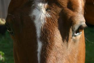 http://www.dunsgathan.net/feannog/horsewarriors.html