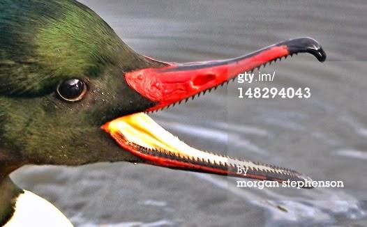 Hewan dengan gigi taring yang menakutkan di dunia