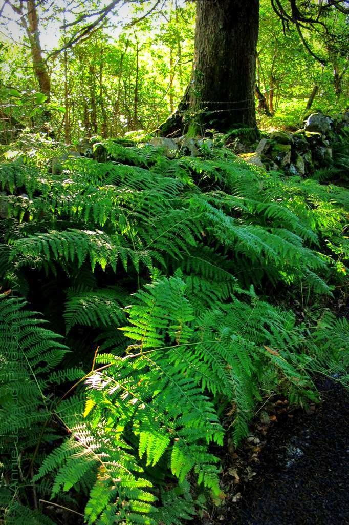tree, green ferns