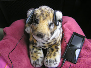 Spotty wearing headphones