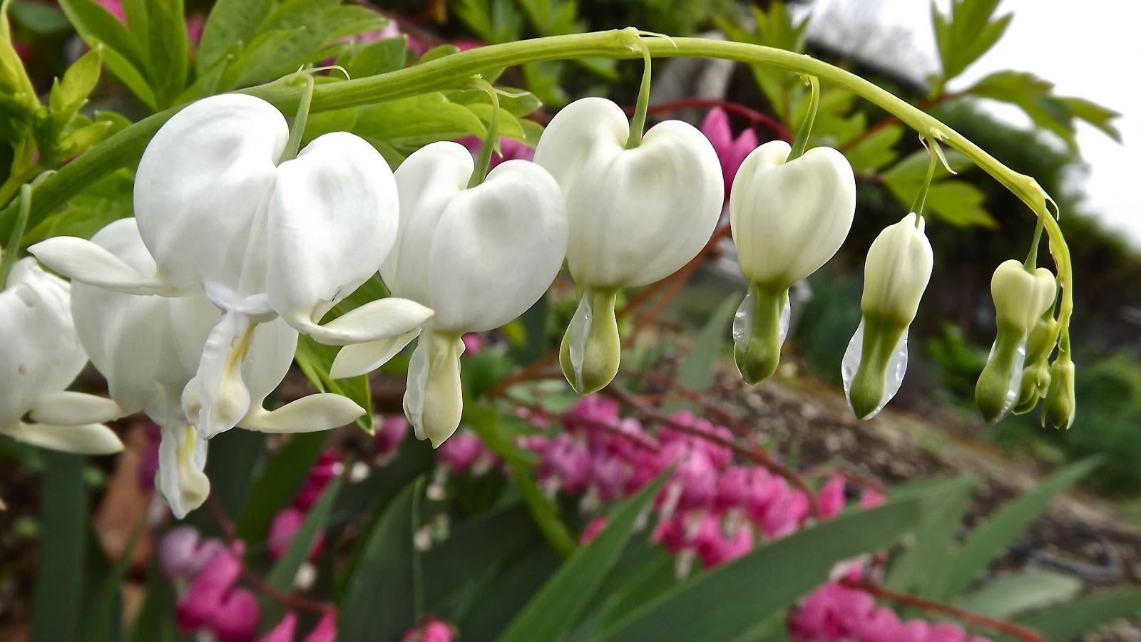 3dvert fleurs et plantes du jardin printemps 2012 for Fleurs jardin printemps