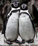 """""""La Marcha de los pinguinos"""" (Luc Jacquet)"""