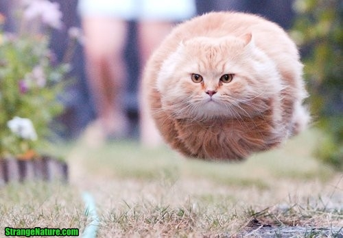 funny+flying+cat.jpg