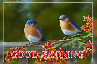 Birds Wishing you a Good Morning