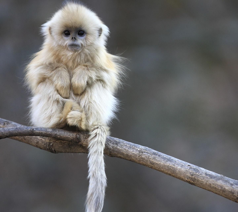 http://4.bp.blogspot.com/-3OoXYsBX7u0/UFBxMne7qgI/AAAAAAAAAqU/dUZHlbxs-3A/s1600/white-monkey-wallpaper.jpg