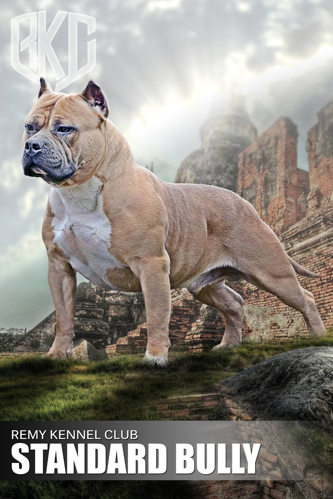 NoVACAIN Kennels: The American Bully & UKC......