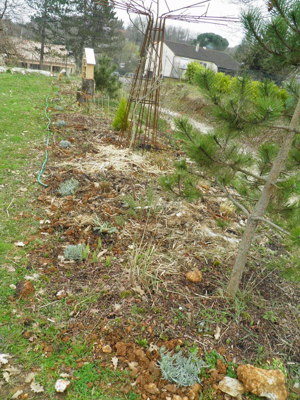 Mon jardin quercynois mi mars au jardin for Jardin mars 2015