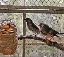 Consider the Birds - June 13