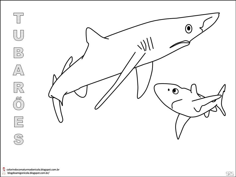 imagens para colorir de tubarão
