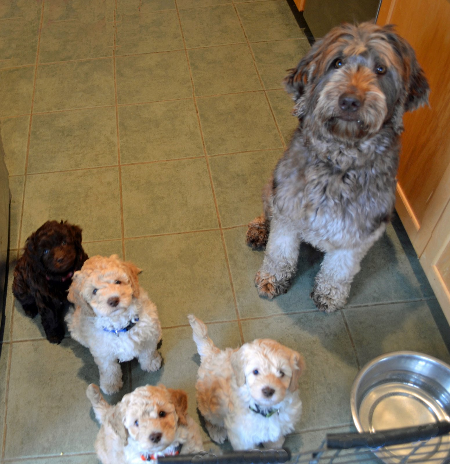 Attaboy Dog Food Website