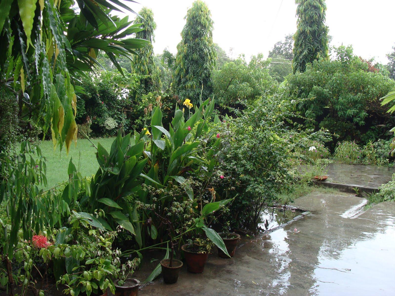 India garden how green is my valley for Indian garden