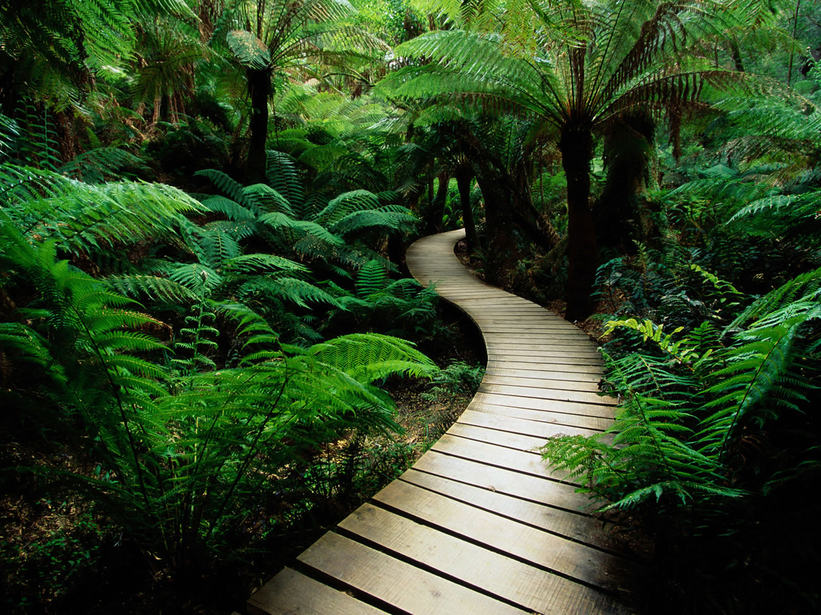 http://4.bp.blogspot.com/-3PrKnKOv5b8/TzLHaK9HH2I/AAAAAAAAAHQ/1LrHNsVkvTI/s1600/3d-nature-wallpaper-3D-Jungle-Wallpapers%20(3).jpg