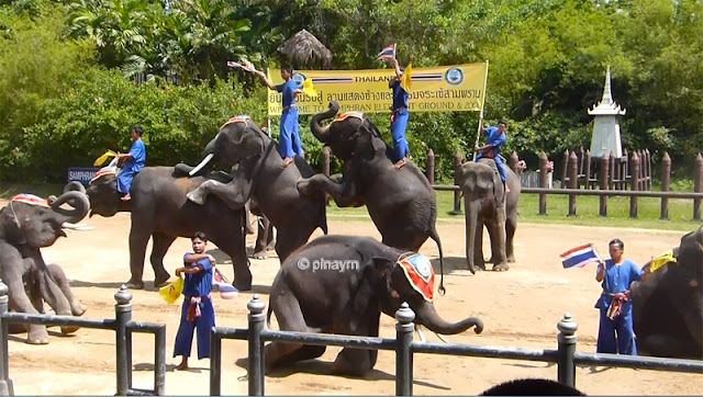 entrance of the elephant show
