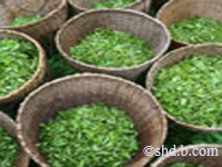images of darjeeling tea