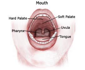 Bagaimana Mendeteksi Bibir Kanker